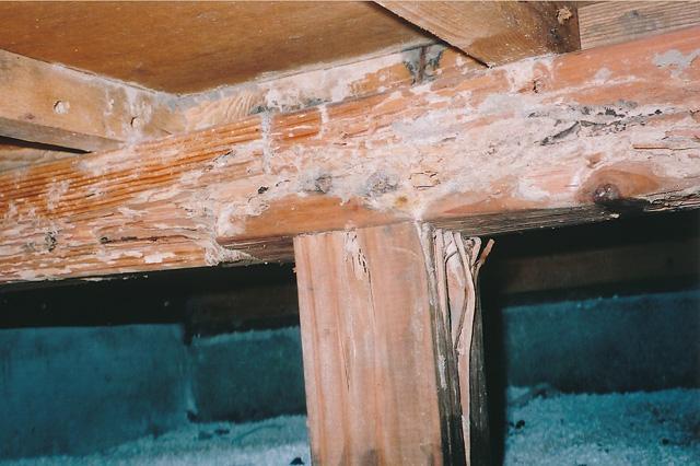 漏電と雨漏り