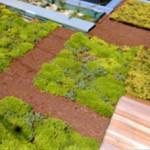 屋上緑化の場合の雨漏り修理(杉並区)