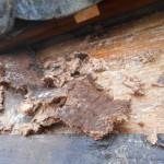 野地板の腐朽を見越した屋根修理 -1- (杉並区)