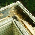 ベランダ笠木の雨漏り修理(杉並区)